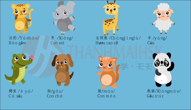 Hình ảnh Học tiếng Trung qua hình ảnh sinh động dễ nhớ 4