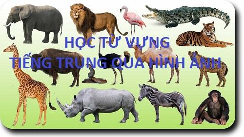 Học tiếng Trung qua hình ảnh sinh động dễ nhớ